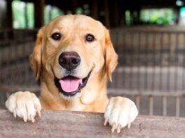 Nueve meses de cárcel para una mujer por asfixiar a su perra